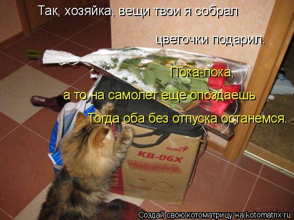 Котоматрица: Пока-пока, цветочки подарил. Так, хозяйка, вещи твои я собрал а то на самолет еще опоздаешь Тогда оба без отпуска останемся.