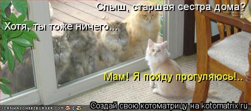 Котоматрица: Слыш, старшая сестра дома? Хотя, ты тоже ничего... Мам! Я пойду прогуляюсь!..