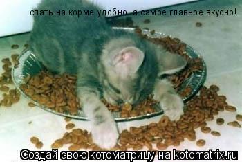 Котоматрица: спать на корме удобно, а самое главное вкусно!