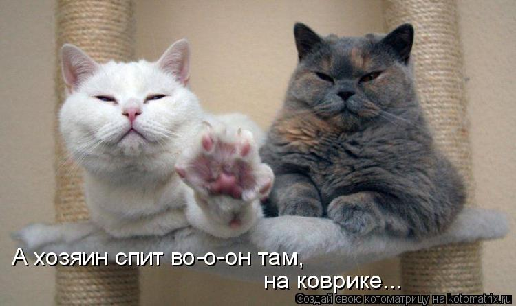 Котоматрица: А хозяин спит во-о-он там, на коврике...