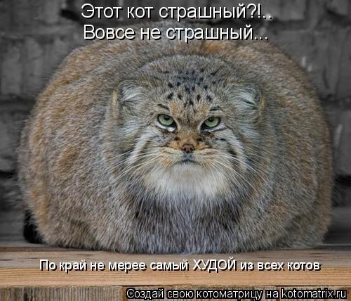 Котоматрица: Этот кот страшный?!.. Вовсе не страшный... По край не мерее самый ХУДОЙ из всех котов