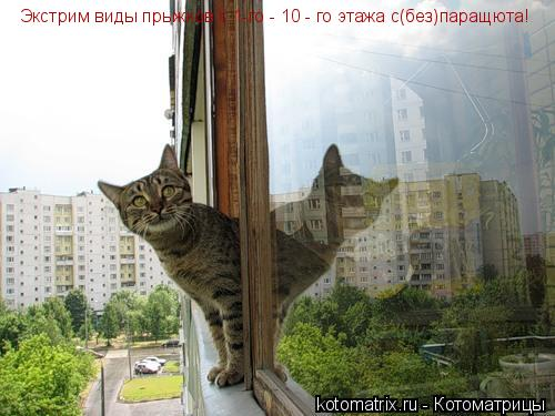 Котоматрица: Экстрим виды прыжков:с 1-го - 10 - го этажа с(без)паращюта!