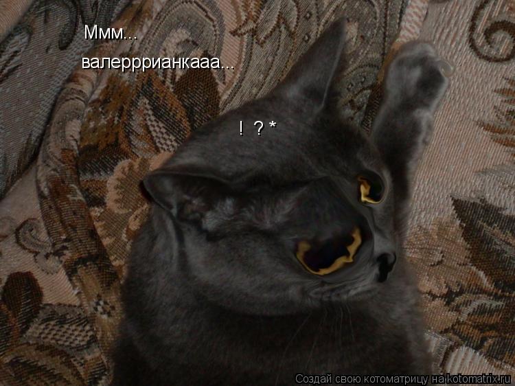 Котоматрица: Ммм... валерррианкааа... !  ? *