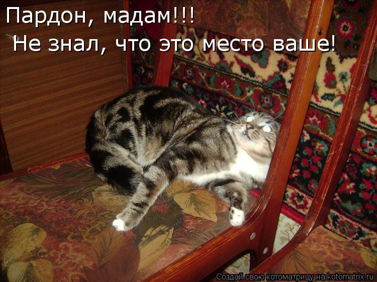 Котоматрица: Пардон, мадам!!! Не знал, что это место ваше!