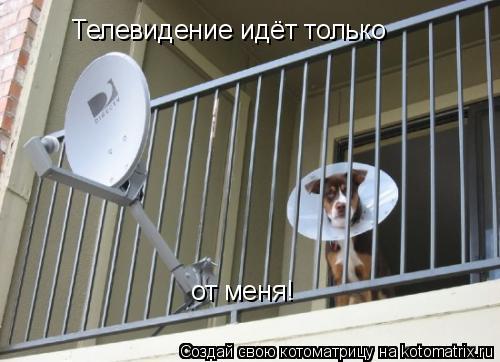 Котоматрица: Телевидение идёт только Телевидение идёт только от меня!