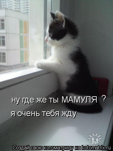 Котоматрица: ну где же ты МАМУЛЯ я очень тебя жду ?