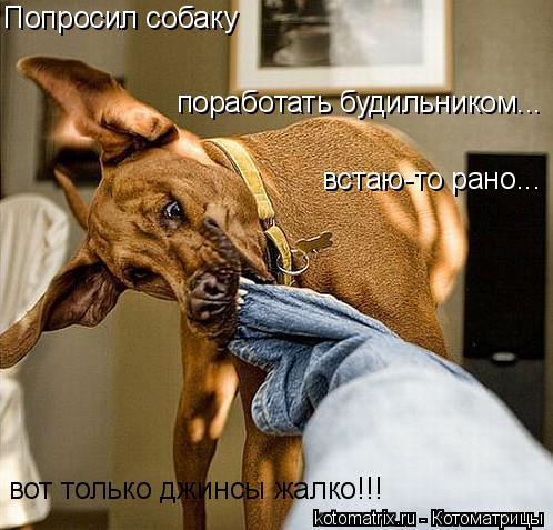 Котоматрица: Попросил собаку поработать будильником... встаю-то рано... вот только джинсы жалко!!!