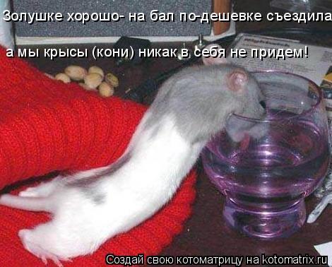 Котоматрица: Золушке хорошо- на бал по-дешевке съездила, Золушке хорошо- на бал по-дешевке съездила, а мы крысы (кони) никак в себя не придем!