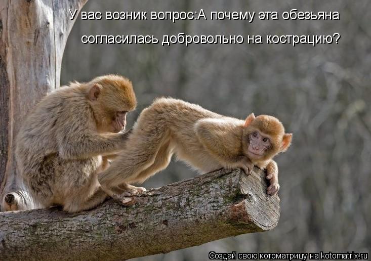 Котоматрица: У вас возник вопрос:А почему эта обезьяна согласилась добровольно на кострацию?
