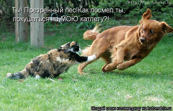 Котоматрица: Ты! Презренный пёс!Как посмел ты, Ты! Презренный пёс!Как посмел ты, покушаться на МОЮ катлету?!