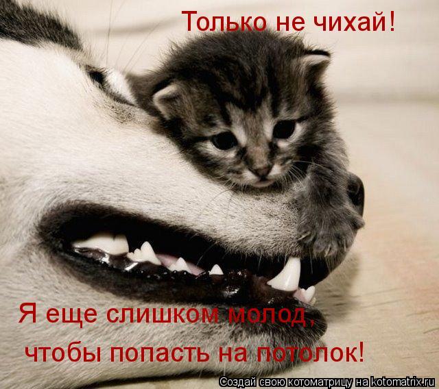 Котоматрица: Только не чихай! Я еще слишком молод,  чтобы попасть на потолок!