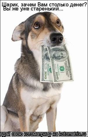 Котоматрица: Шарик, зачем Вам столько денег?   Вы же уже старенький...