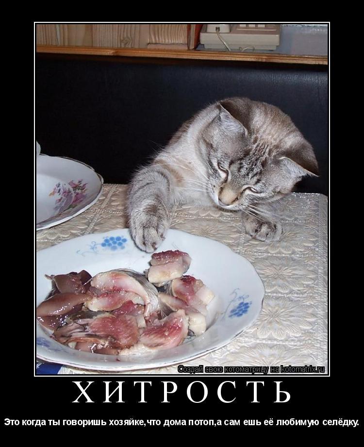 Котоматрица: Хитрость Это когда ты говоришь хозяйке,что дома потоп,а сам ешь её любимую селёдку.