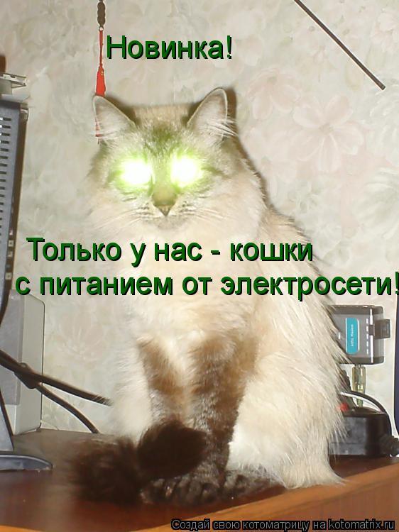 Котоматрица: Новинка!  Только у нас - кошки  с питанием от электросети!