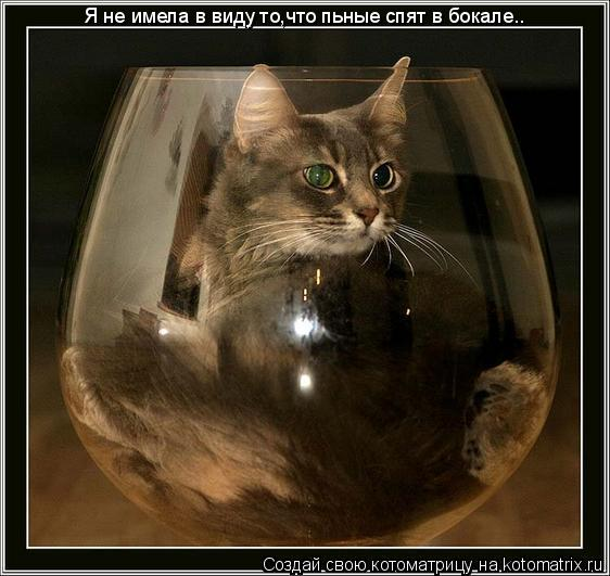 Котоматрица: Я не имела в виду то,что пьные спят в бокале..