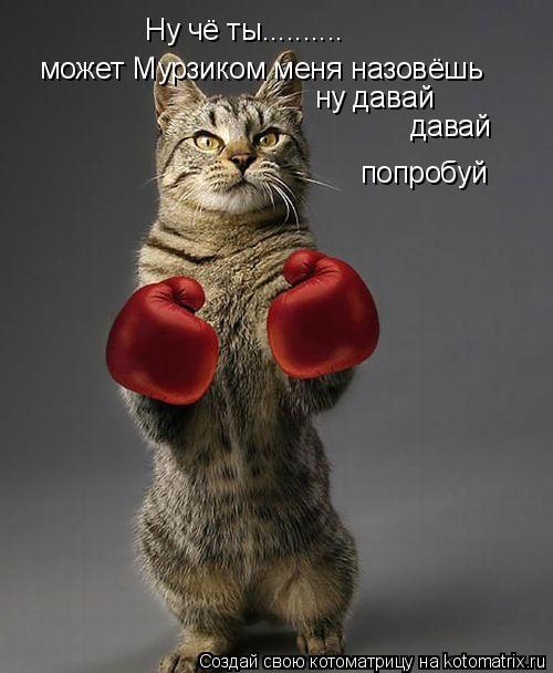 Котоматрица: Ну чё ты.......... может Мурзиком меня назовёшь ну давай давай попробуй