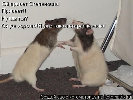 Котоматрица: Ой,привет Степановна! Привеет!! Ну как ты? Ой да хорошо!Я уже такая старая крыска!