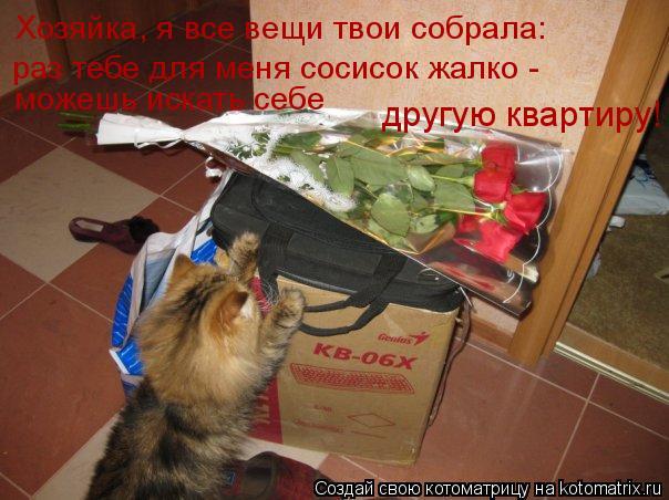 Котоматрица: Хозяйка, я все вещи твои собрала: другую квартиру! раз тебе для меня сосисок жалко -  можешь искать себе