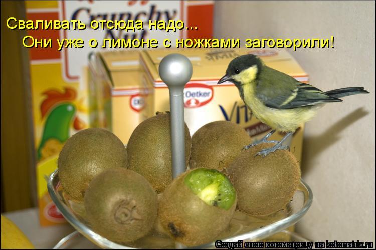 Котоматрица: Сваливать отсюда надо... Они уже о лимоне с ножками заговорили!