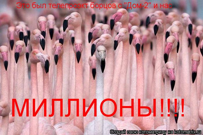 """Котоматрица: Это был телепроэкт борцов с """"Дом-2"""" и нас МИЛЛИОНЫ!!!!"""