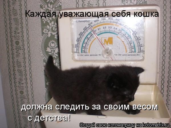 Котоматрица: должна следить за своим весом  с детства! Каждая уважающая себя кошка