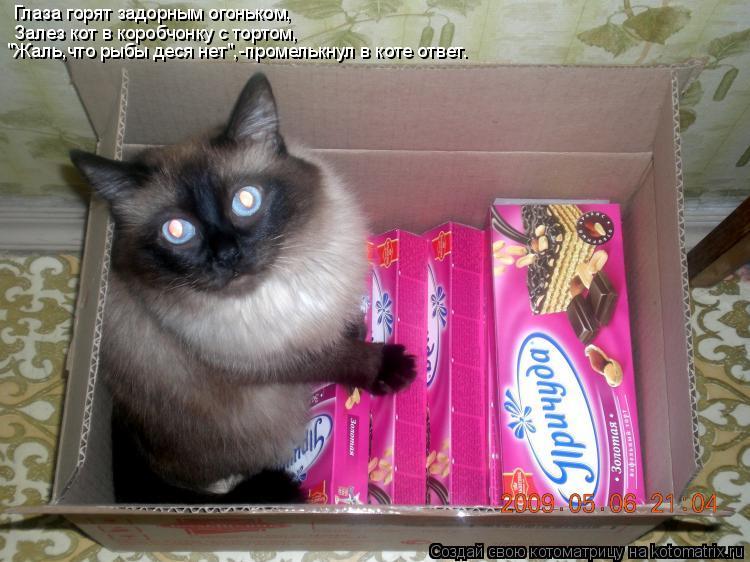 """Котоматрица: Глаза горят задорным огоньком, Залез кот в коробчонку с тортом, """"Жаль,что рыбы деся нет"""",-промелькнул в коте ответ."""
