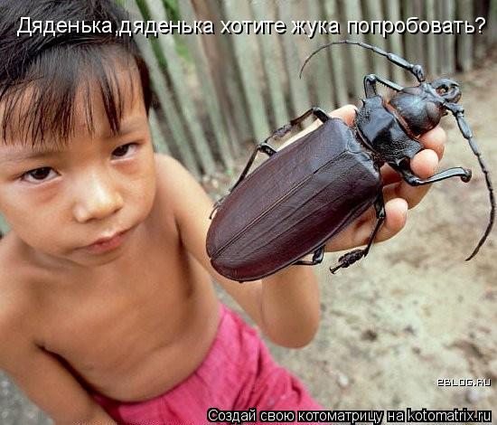 Котоматрица: Дяденька,дяденька хотите жука попробовать?