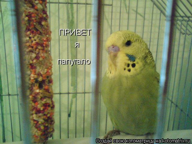 Котоматрица: ПРИВЕТ я  папугало