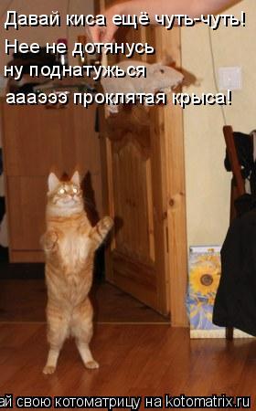 Котоматрица: Давай киса ещё чуть-чуть! Нее не дотянусь ну поднатужься аааэээ проклятая крыса!