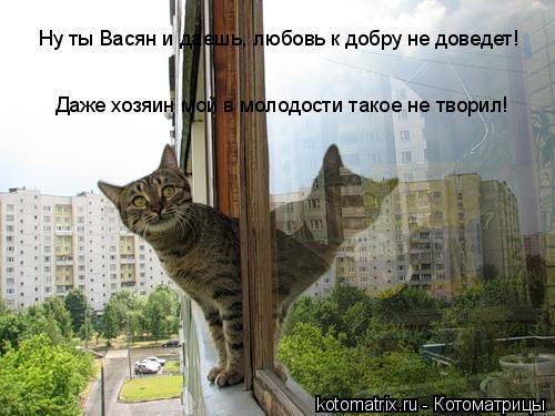 Котоматрица: Ну ты Васян и даешь, любовь к добру не доведет! Даже хозяин мой в молодости такое не творил!