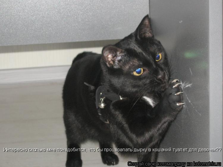 Котоматрица: Интересно сколько мне понадобится, что бы процарапать дырку в кошачий туалет для девочек??