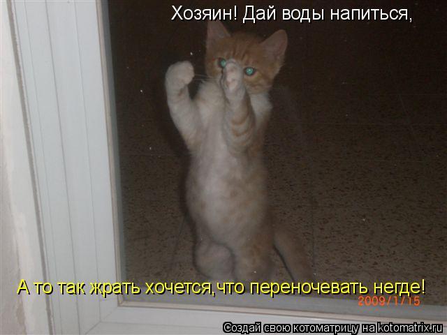 Котоматрица: Хозяин! Дай воды напиться, А то так жрать хочется,что переночевать негде!