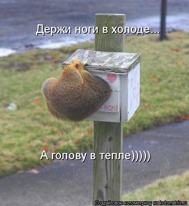 Котоматрица: Держи ноги в холоде... А голову в тепле)))))