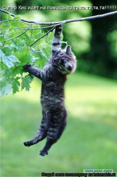Котоматрица: Супер Кис идёт на помощь,та,та,та,та,та,та!!!!!!!!