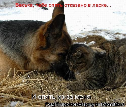 Котоматрица: Васька, тебе опять отказано в ласке... И опять из-за меня...