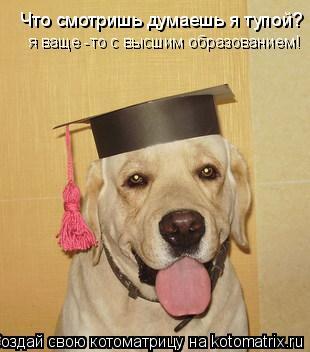 Котоматрица: Что смотришь думаешь я тупой? я ваще -то с высшим образованием!