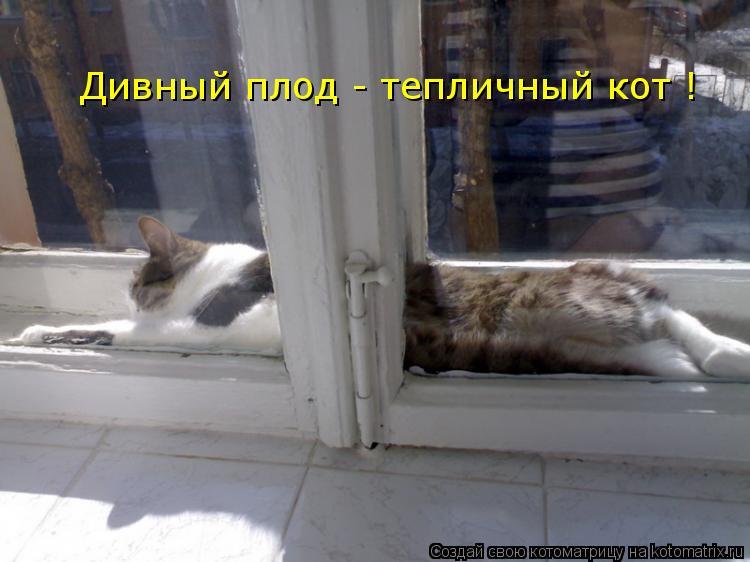 Котоматрица: Дивный плод - тепличный кот !