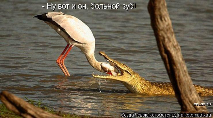 Котоматрица: - Ну вот и он, больной зуб!