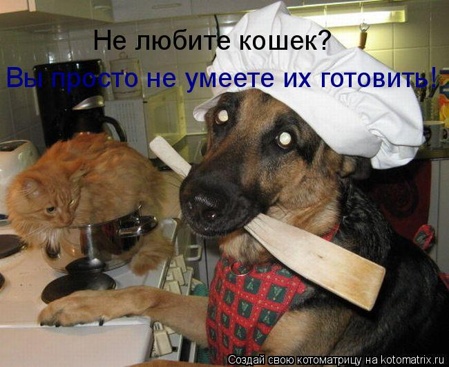 Котоматрица: Не любите кошек? Вы просто не умеете их готовить!