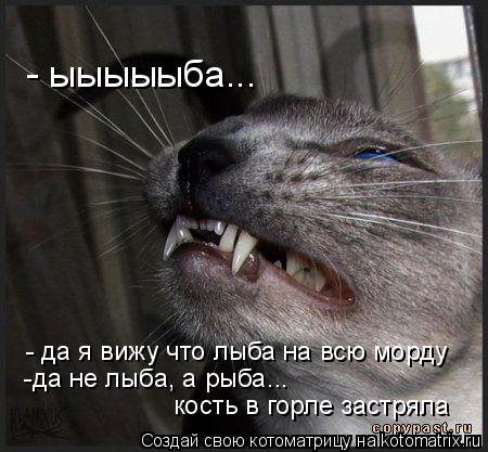Котоматрица: - да я вижу что лыба на всю морду -да не лыба, а рыба... кость в горле застряла - ыыыыыба...
