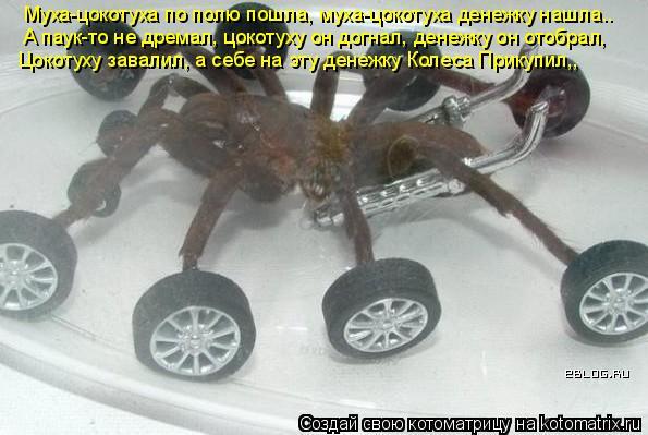Котоматрица: Муха-цокотуха по полю пошла, муха-цокотуха денежку нашла.. А паук-то не дремал, цокотуху он догнал, денежку он отобрал, Цокотуху завалил, а се