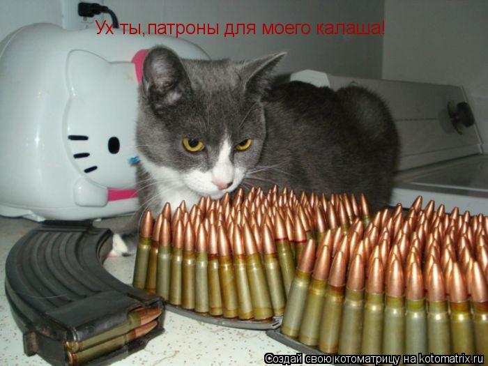 Котоматрица: Ух ты,патроны для моего калаша!