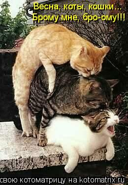 Котоматрица: Весна, коты, кошки...  Брому мне, бро-ому!!!