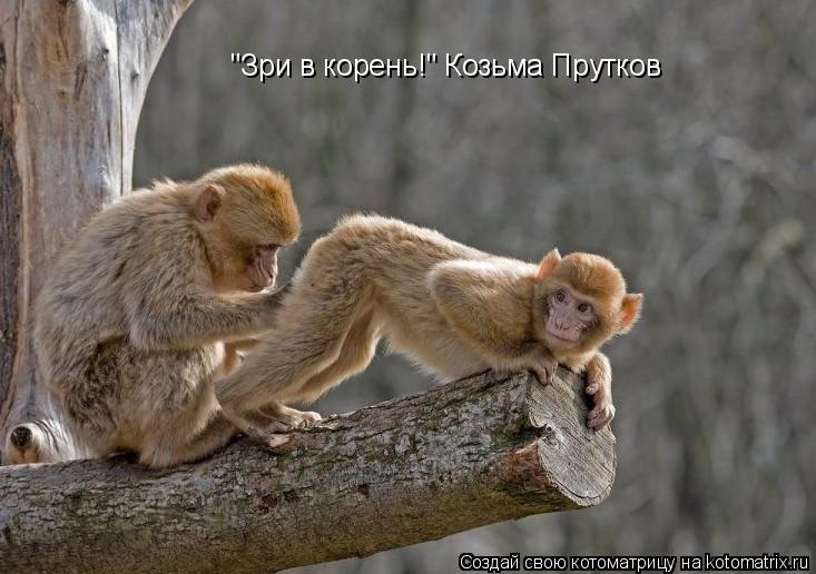 "Котоматрица: ""Зри в корень!"" Козьма Прутков"