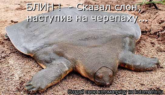 Котоматрица: БЛИН !  - Сказал слон,  наступив на черепаху...