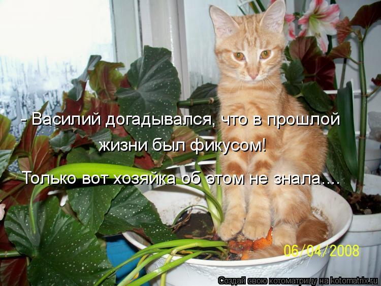 Котоматрица: - Василий догадывался, что в прошлой жизни был фикусом! Только вот хозяйка об этом не знала....