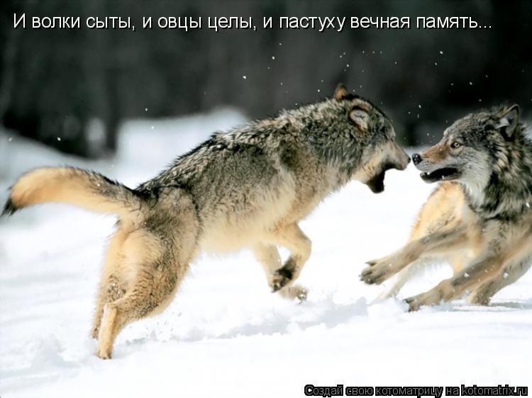 Котоматрица: И волки сыты, и овцы целы, и пастуху вечная память...