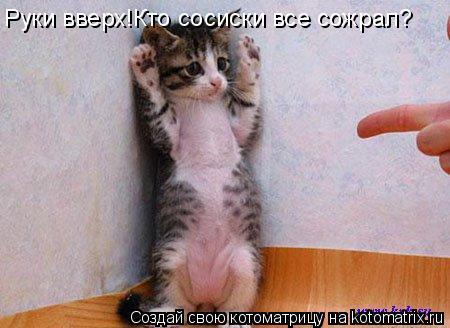 Котоматрица: Руки вверх!Кто сосиски все сожрал?