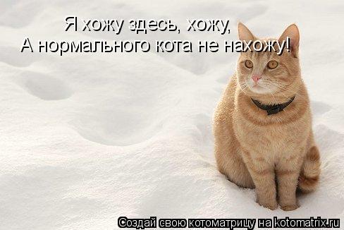 Котоматрица: Я хожу здесь, хожу, А нормального кота не нахожу! А нормального кота не нахожу!
