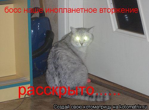 Котоматрица: босс наше инопланетное вторжение расскрыто......